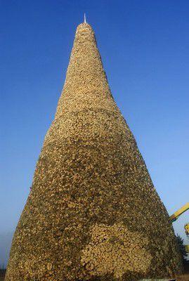 Из области рекордов - самая высокая поленница